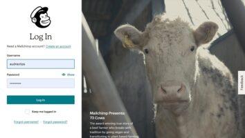 Comment Créer une newsletter automatisée avec Mailchimp
